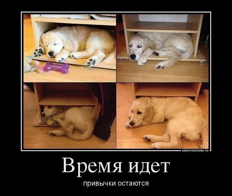собакен.jpg