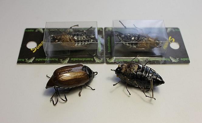 майський жук.jpg