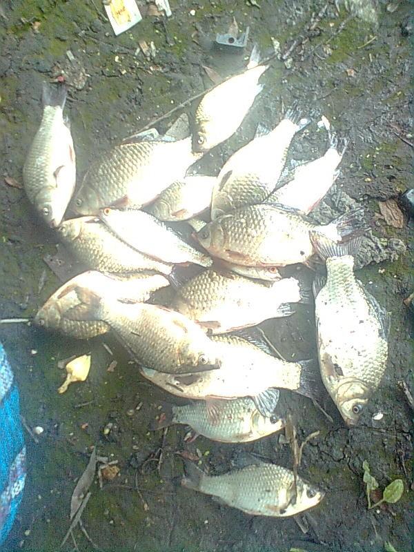 клев рыбы в харькове и обл