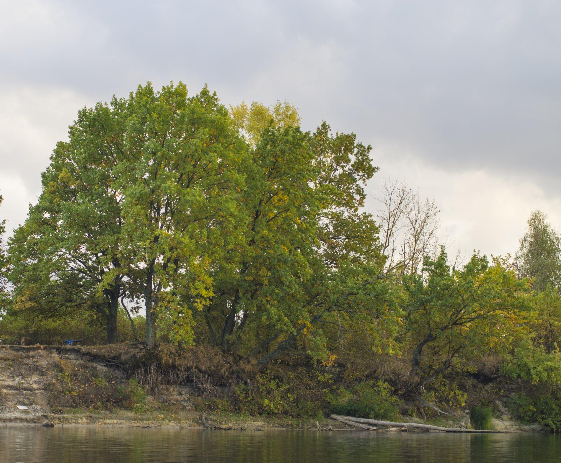Осенние деревья.JPG