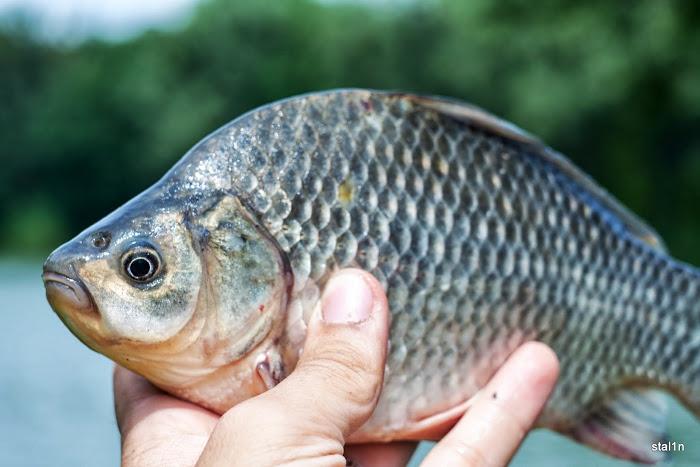 20130626_Fishing_Mizoch_042[1].jpg