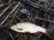 рыбалка в чернигове форум