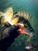 рыболовный сайт чернигова