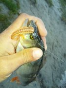 отчеты о рыбалке р сухой кагамлык